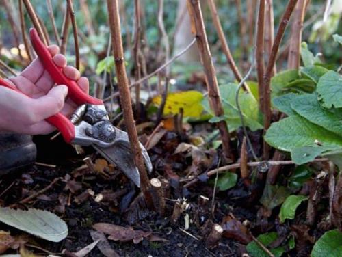 Чем подкормить малину осенью, весной и в разгар лета?