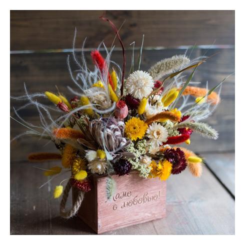 Растения сухоцветы — цветы букеты