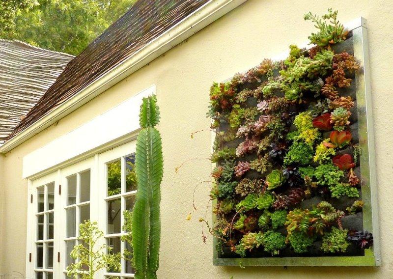 Как сделать зелёную живую стену из растений. семь главных принципов