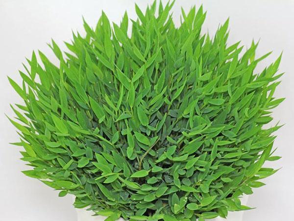 Декоративные злаки, травы и осоки для сада: фото, названия видов и сортов