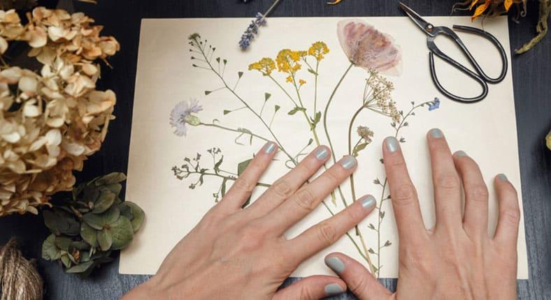 гербарий из листьев своими руками