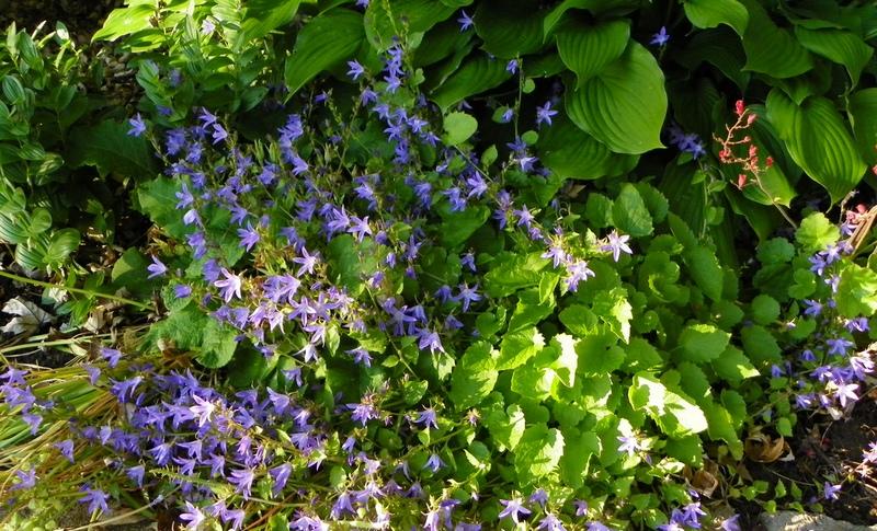 ползучие растения