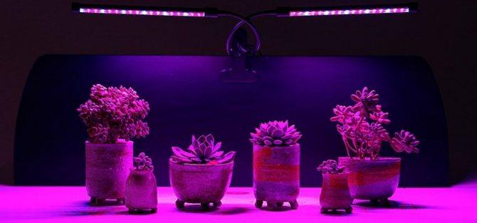 Лампы для растений (40 фото): как выбрать фитолампу для комнатных цветов? фитосветильники для выращивания орхидей в домашних условиях. отзывы владельцев