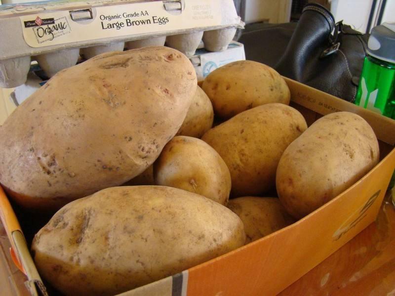 Все возможные способы как сохранить картофель без погреба