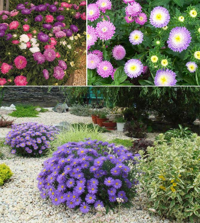 Многолетние цветы для дачи и сада: 95 фото с названиями, уход, выращивание