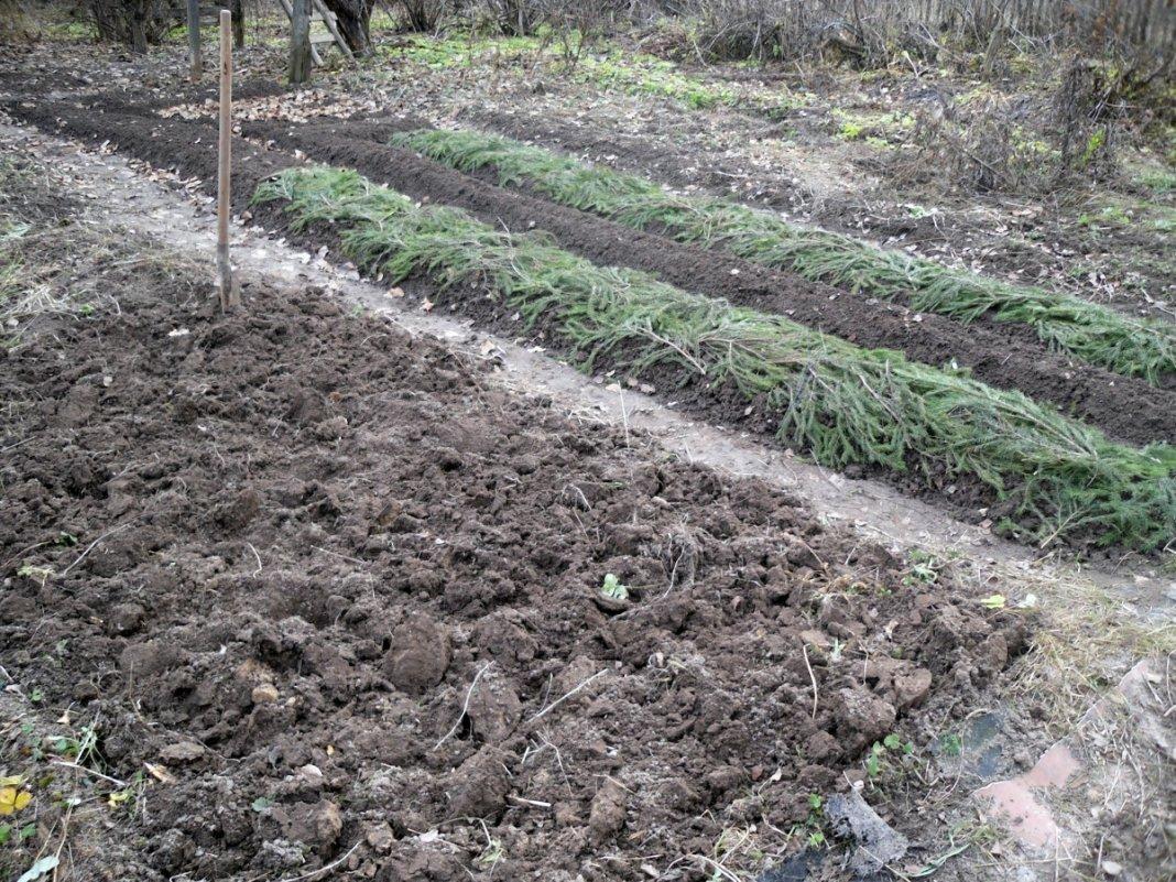 как посадить лук на зиму