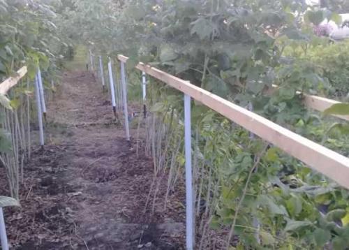 Чем подкормить малину осенью после обрезки и в зиму: удобрения и прочие варианты для начинающих