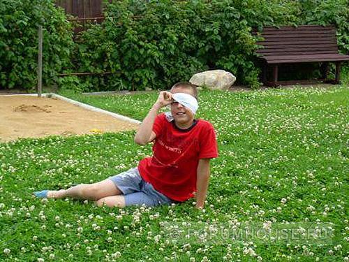 когда сеять клевер для газона