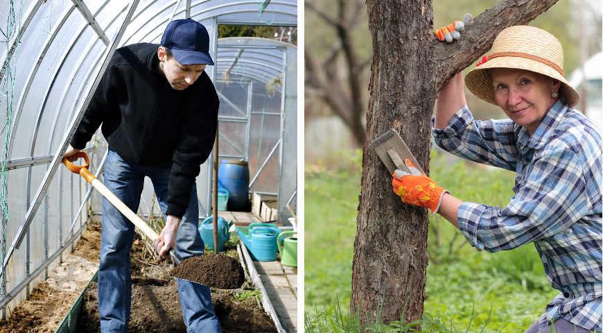 Обработка сада весной: чем опрыскивать от болезней и вредителей деревья и кустарники