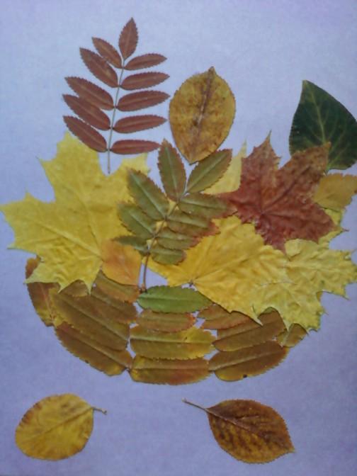 аппликация из листьев клена