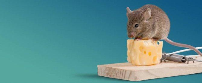 Какой утеплитель не едят мыши: как защитить пенопласт и пенополистирол
