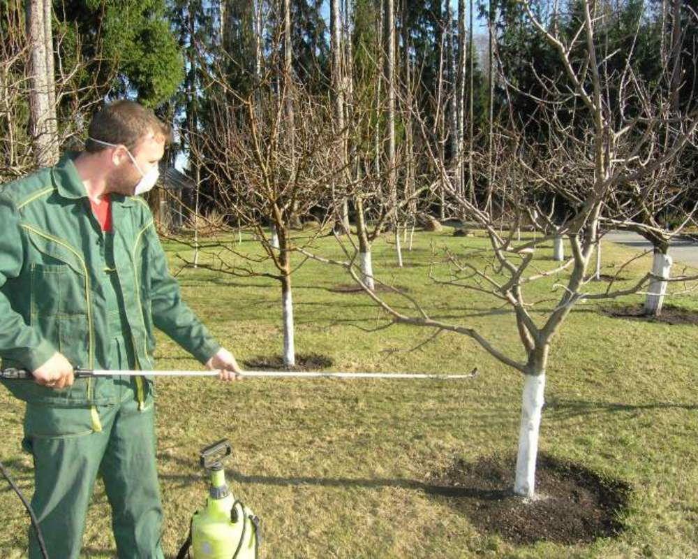 осенняя обработка сада от болезней