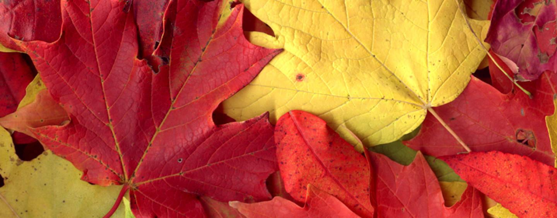 Поделки из осенних листьев: композиция своими руками, как сделать, фото