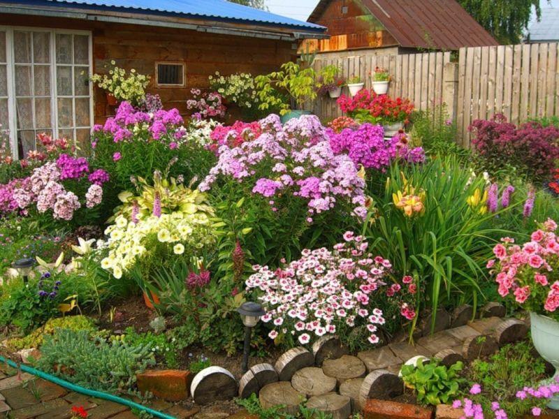 какие цветы растут на клумбе
