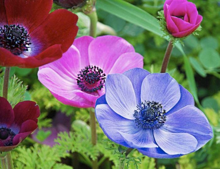 Какие есть сорта низкорослых цветов для клумбы: названия растений и их виды, оформление цветника, советы