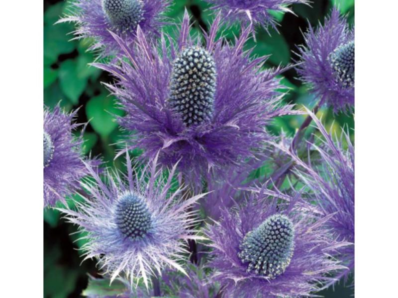Цветы-сухоцветы: 20 самых красивых растений и идеи композиций - огород, сад, балкон - медиаплатформа миртесен