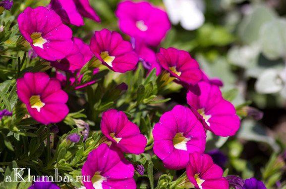растения клумбы возле дома