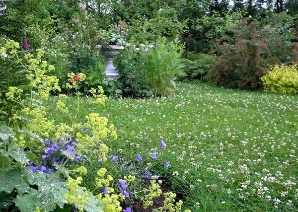 Выращивание и лечебные свойства клевера, его разновидность и применение