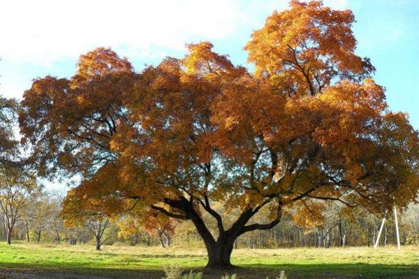 деревья и кустарники для ландшафтного дизайна