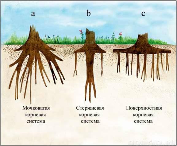 Отличия ели от сосны: по внешнему виду, шишек, формы хвои
