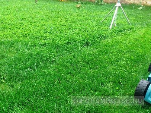 Изучаем газон из клевера, определяемся с его плюсами и минусами