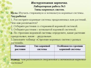 Корень – зоны корневой системы, таблица типов