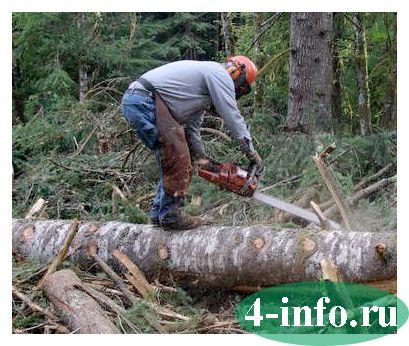 Штраф за спиленное дерево в городе, в лесу, на собственном участке