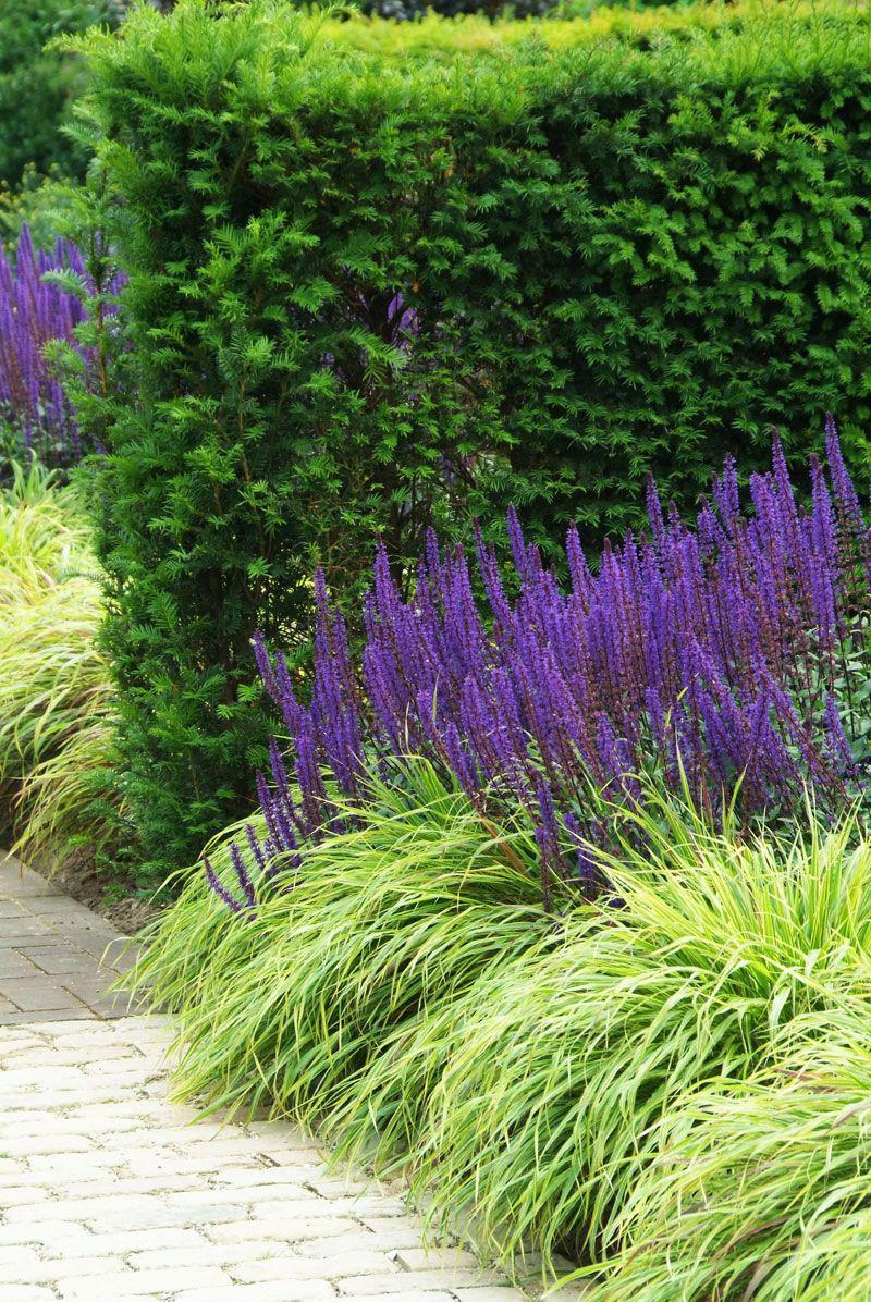 Декоративная трава: 135 фото красивых идей применения декоративных трав и растений