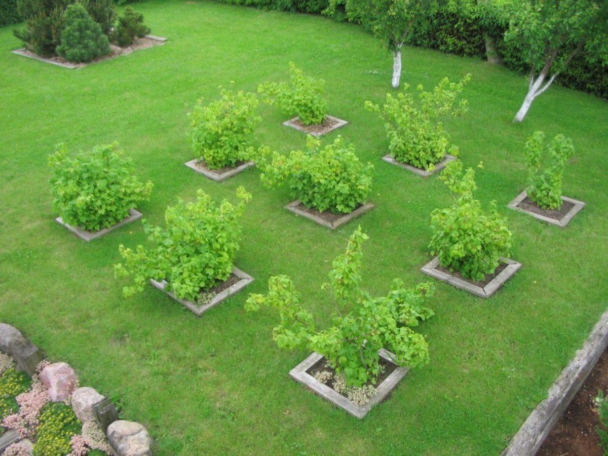Как посадить дерево правильно? сроки, удобрения, уход. фото — ботаничка.ru