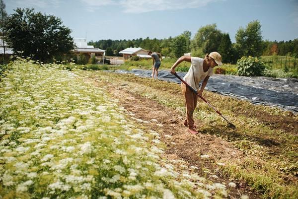Органическое земледелие на даче с нуля - с чего начать, устройство умных грядок на участке с видео