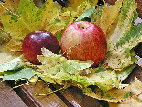 Лучшие сорта яблок - фото, названия и описания (каталог)