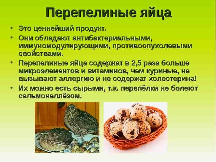 Сырые перепелиные яйца: пить или не пить?