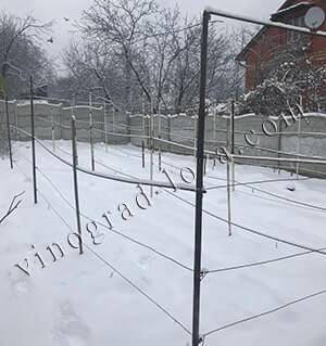 Виноград: уход осенью, подготовка к зиме, обрезка