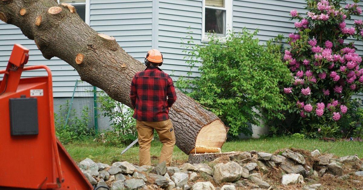 штраф за спил дерева на собственном участке