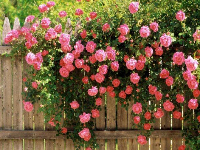 Стихи роза льда - сборник красивых стихов в доме солнца