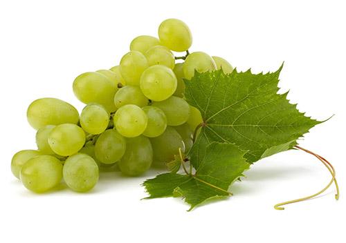 Вино из винограда в домашних условиях. пошаговая технология и рецепт.