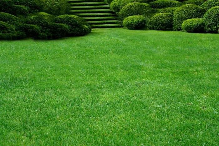 Как сделать газон на дачном участке самостоятельно