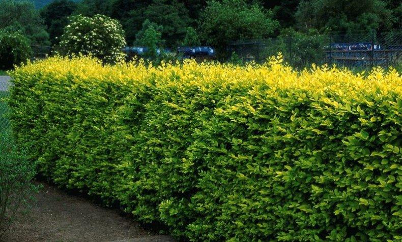 Выбираем красивые декоративные кустарники для сада и дачи