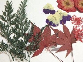 Как быстро высушить гербарий: 6 способов
