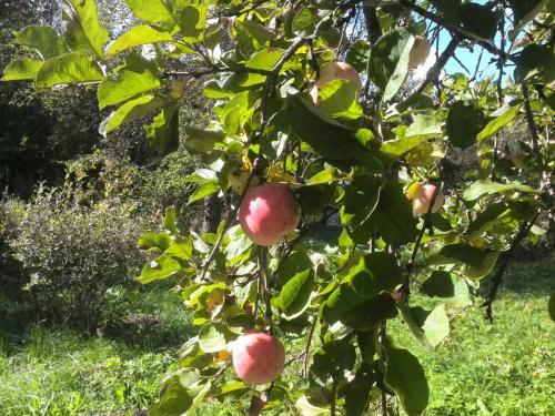 чем подкормить яблони на зиму