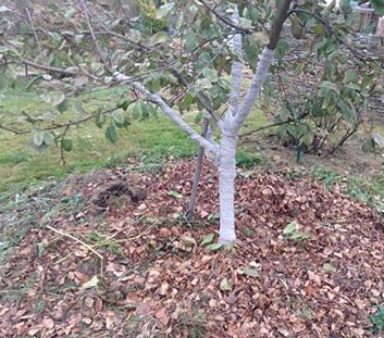 Когда и чем опрыскивать плодовые деревья и кустарники весной от вредителей