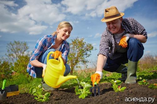 садоводство и огородничество советы дачников
