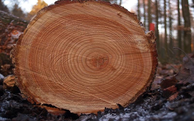 Обзор физических свойств древесины