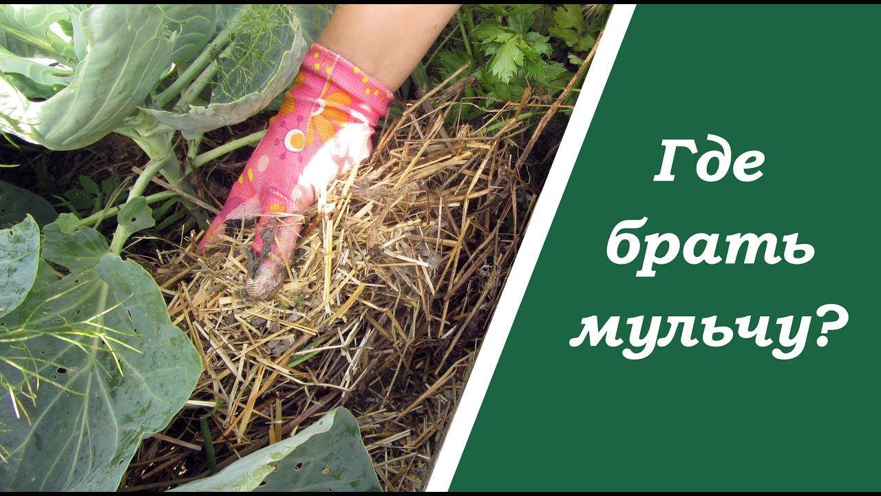 Мульчирование почвы своими руками — понятие, особенности процесса