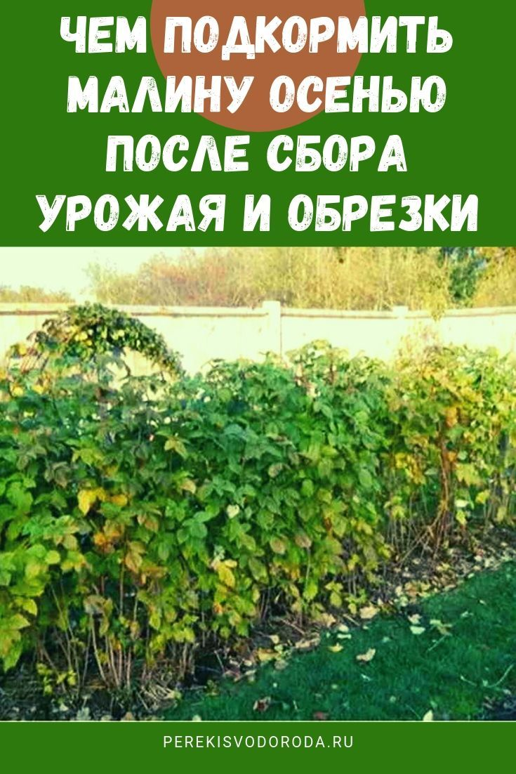 чем подкормить малину в октябре