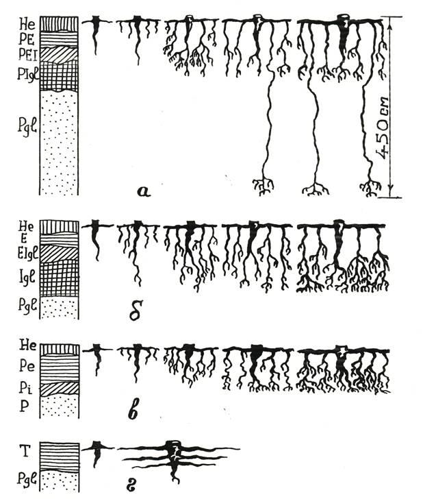 Древесина сосны: плотность, свойства, сорта, применение