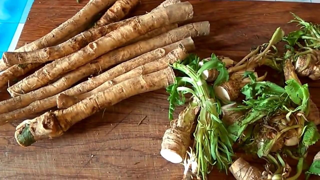 Как выращивать хрен из корня и семян на огороде? рекомендации и видео на ydoo.info