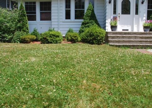 Клевер луговой: лечебные свойства и противопоказания, посадка и уход в саду, фото