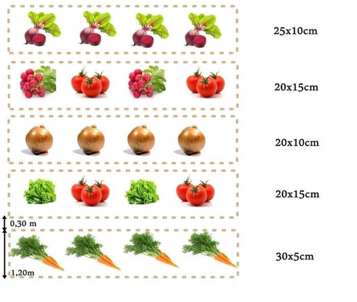 Совместимость растений в саду и огороде таблица