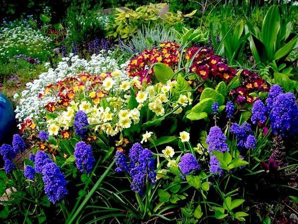 растения клумбы возле дома названия и фото